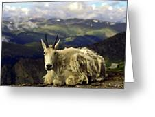 Mountain Goat Resting Greeting Card by Sally Weigand