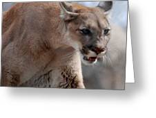 Mountain Lion Greeting Card by Paul Ward
