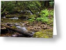Mountain Stream Spring Greeting Card by Thomas R Fletcher