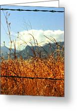 Mountain Wheat With Barbwire Greeting Card by Jaye Crist