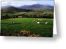 Mourne Mountains From Trassey Road, Co Greeting Card by The Irish Image Collection