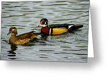 Mr And Mrs Wood Duck Greeting Card by Judy Wanamaker