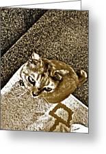 Ms Gato In Sepia Greeting Card by Kornrawiee Miu Miu