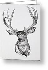 Mule Deer Buck Greeting Card by Lana Tyler
