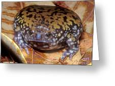 Mullers Termite Frog Greeting Card by Dante Fenolio