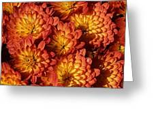 Mums Of A Different Color Greeting Card by Bruce Bley