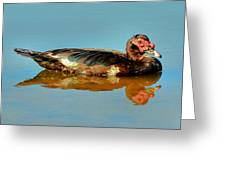 Muscovy Duck - 51005772j Greeting Card by Paul Lyndon Phillips