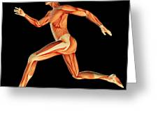 Muscular System Greeting Card by Pasieka
