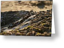 Mussels Sunset Greeting Card by Henrik Lehnerer