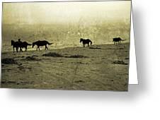 Mustangs Greeting Card by Betsy Knapp