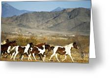 Mustangs Greeting Card by Mark Newman and Photo Researchers