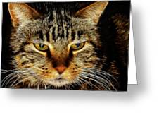 My Bored Cat Greeting Card by Mariola Bitner
