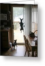 My Dog Can Fly Or Levitating Dog Greeting Card by Rick Rauzi