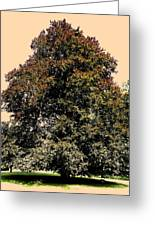 My Friend The Tree Greeting Card by Juergen Weiss