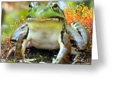 My Frog Friend Greeting Card by Patricia Januszkiewicz