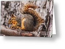 My Nut Greeting Card by Robert Bales