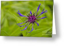 Mystery Wildflower 1 Greeting Card by Sean Griffin