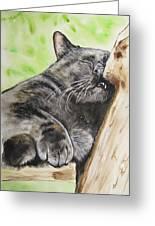Nap Time Greeting Card by Carol Blackhurst