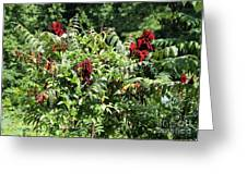 Natchez Trace Wild Sumac Greeting Card by Theresa Willingham