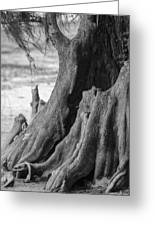 Natural Cypress Greeting Card by Carolyn Marshall