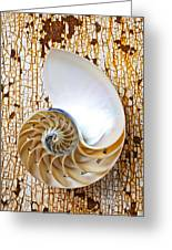 Nautilus Shell On Rusty Table Greeting Card by Garry Gay
