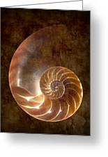 Nautilus Greeting Card by Tom Mc Nemar