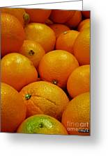 Navel Oranges Greeting Card by Methune Hively