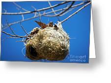 Nest For Rent Greeting Card by Alexandra Jordankova