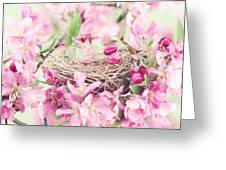Nest In Soft Pink Greeting Card by Stephanie Frey