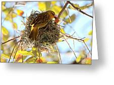 Nesting Instinct Greeting Card by Carol Groenen