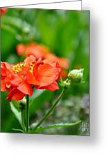 Never Boring Red And Green Greeting Card by Tanya  Searcy