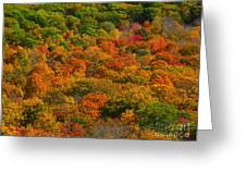 New England Fall Foliage Peak  Greeting Card by Juergen Roth