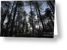 New England Red Pine Forest Greeting Card by Erin Paul Donovan