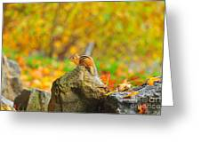 New Hampshire Chipmunk Greeting Card by Catherine Reusch  Daley