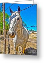 New Mexico Horse Greeting Card by Gregory Dyer