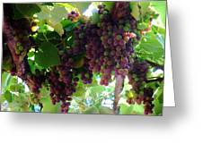 New Wine Greeting Card by Alison Richardson-Douglas