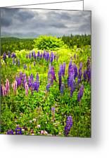 Newfoundland Meadow Greeting Card by Elena Elisseeva