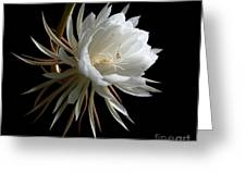 Night-blooming Cereus 1 Greeting Card by Warren Sarle