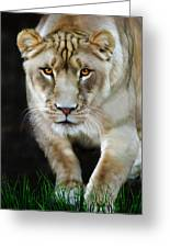 Nikita Greeting Card by Big Cat Rescue