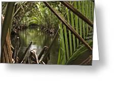 Nipa Palms Line A Channel Greeting Card by Tim Laman