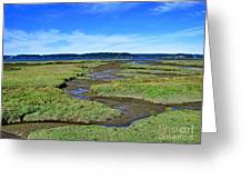 Nisqually Estuary At Low Tide Greeting Card by Sean Griffin
