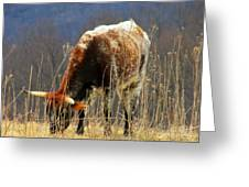 No Bull Greeting Card by Joyce Kimble Smith