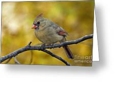 Northern Cardinal Female - D007849-1 Greeting Card by Daniel Dempster