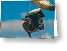 Northern Flicker Greeting Card by Harry Strharsky