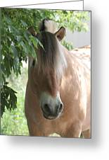 Norwegian Fjord Horse In The Shade Greeting Card by Laurie With