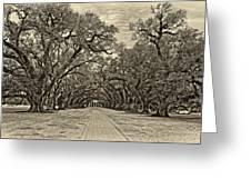 Oak Alley 3 Antique Sepia Greeting Card by Steve Harrington