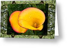 Oak Tree Cala Greeting Card by Bell And Todd