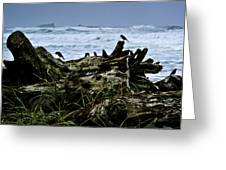 Ocean Beach Dwellers Greeting Card by Dale Stillman
