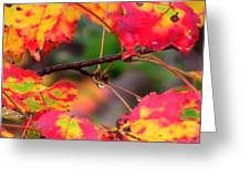 October Maple Greeting Card by Mandi Howard