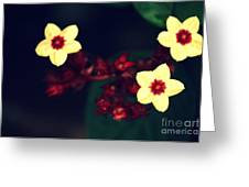 Offering Greeting Card by Vishakha Bhagat